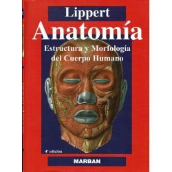 Anatomía. Estructura y morfología del cuerpo humano.