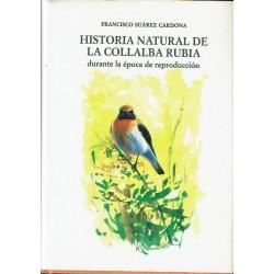 Historia natural de la collalba rubia durante la época de reproducción.